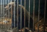 Пикет в защиту медведицы Маши