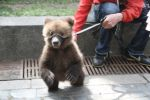 Жители Петербурга настаивают на запрете фотобизнеса с животными