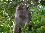 Авиакомпания «Эйр Чайна» (Air China) прекращают перевозку обезьян для экспериментов