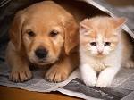 Наркоконтроль рекомендовал животным временно не жить