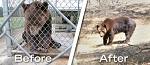 История со счастливым концом о медведе Бене