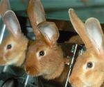 Avon тестирует продукцию на животных