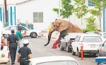 Цирк - ад слонов -29.jpg