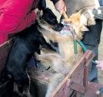 Ломают зубы животным