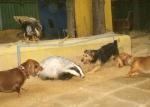 Животных рвут на части, ломают позвонки и опять используют на притравке - до смерти