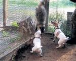Животные лишены возможности убежать или защититься