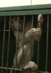 Жестокость к животным в российских цирках