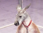 "За кулисами цирка. Международная кампания ""За цирк без животных!"""