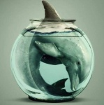 Санкт-Петербург требует прекратить мучить дельфинов в дельфинариях