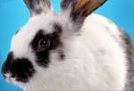 Гуманное общество и LUSH призывают косметические компании России покончить с жестокостью к животным