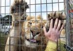 Колумбия запрещает цирки с дикими животным