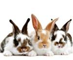 Индия запретила тестирование косметики на животных