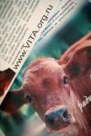 В Магнитогорске впервые отметили Международный                День без мяса