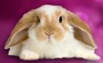 Этический прорыв: санитарный надзор Китая предложил отменить тестирование косметики на животных