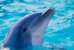 Нет - строительству дельфинария в Новосибирске! Открытое письмо Президенту и Губернатору