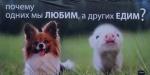 Всемирный                      День защиты животных. Кириши: Реклама за права животных