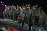 Лос-Анджелес                      запретил использовать багры для слонов в цирках