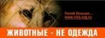 """28 февраля горожанам покажут страшные кадры добычи меха животных                      в акции """"Антимех"""" на Невском проспекте"""