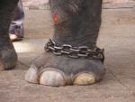 Италия прекратила субсидирование цирков с животными