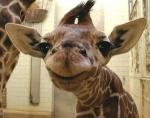 Почему                      зоопарки стали анахронизмом в эпоху Discovery Channel