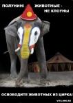 В Международный день цирка без жестокости медведь придёт к Полунину