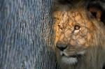 В Ирландии запрещают цирк с животными