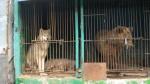 Зоопарк: концлагерь для животных