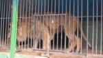 """Зоолунапарк """"Барс"""": приговор обжалованию не подлежит?"""