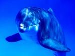 Экологическая                      палата России просит прокурора Республики Коми и мэра Сыктывкара                      в экстренном порядке провести проверку деятельности гастролирующего                      в городе дельфинария