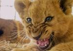 Победа! Мексика запретила цирк с животными