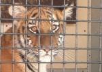 Двойная                      победы за два дня! Нидерланды запретили цирк с животными