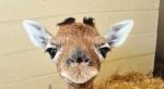 """""""ВИТА"""" призывает отказаться от зоопарков в пользу заповедников"""