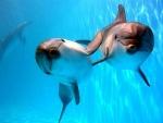 Московский дельфинарий уличен в жестоком обращении с животными