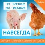 Победа! Правительство Австралии отменило самые жестокие методы животноводства