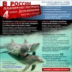 Владельцы шоу в Петербурге не имели права содержать дельфинов