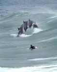 Всемирный                            день защиты китов и дельфинов. Дельфинотерапия