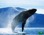 Всемирный                      день защиты китов и дельфинов