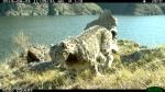 Запрещение петельного лова зверей на территории России
