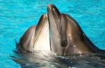 Станет ли Евросоюз свободной зоной от дельфинариев?