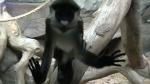 """ТЦ """"РИО"""" привлечён к административной ответственности за создание зоопарка"""
