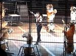 Плимут, штат Массачусетс, запретил использование диких животных в Цирках