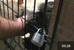 """Организации                      по защите животных Санкт-Петербурга требуют остановить деятельность                      """"контактных"""" зоопарков"""
