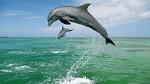 Дельфины на свободе