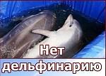 Запрещённый в Петербурге дельфинарий пытается открыться в Старом Осколе