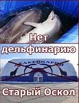Спаси дельфина, пока он живой!