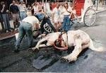 Конные экипажи запрещены в столице Пуэрто-Рико