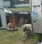 Псков: цирк с животными отменил гастроли из-за непроданных билетов. Месяц назад цирк с животными выдворен из Павловска