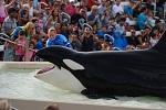 >Океанариум SeaWorld: новые инциденты жестокого обращения с животными