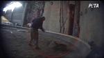 >Всемирно известный дрессировщик тигров избивает тигра за кулисами цирка (ВИДЕО)