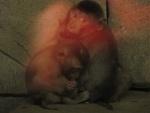 Краснокнижные животные в стеклянных витринах магазина: организации по защите животных возмущены открытием зоопарка в торговом центре РИО в Санкт-Петербурге